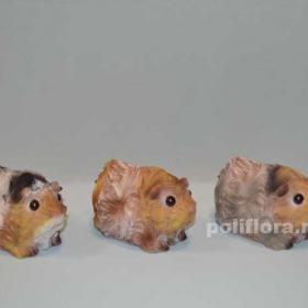 Морские свинки  CQP1325-283