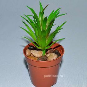 Суккулент, декор, купить цветы, купить суккулент, дешево, пластик, качество, кактус