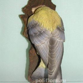 Птица голова в дупле
