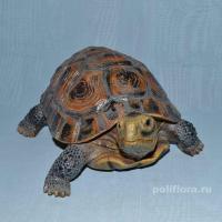 Черепаха  14 см