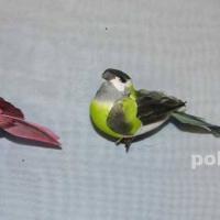 Декор-Птички 8,5 см (перо-клипса) 0114-8,5