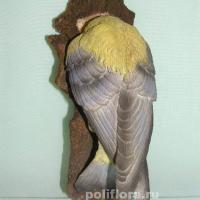 Птица голова в дупле 18 см MG18960